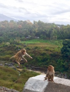 Monkeys 2 leaping